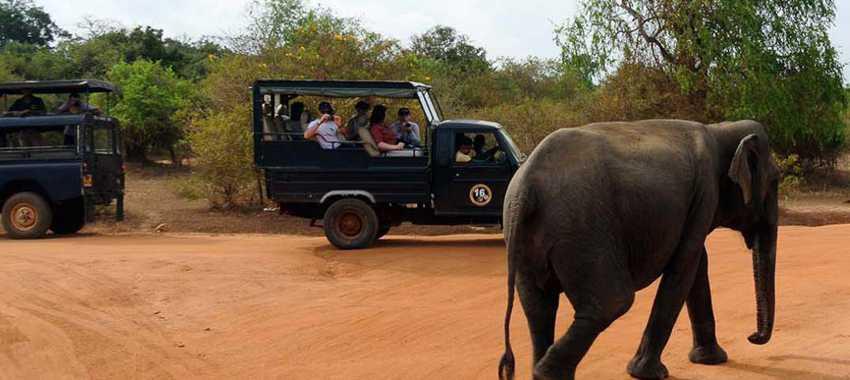 srilanka-wild